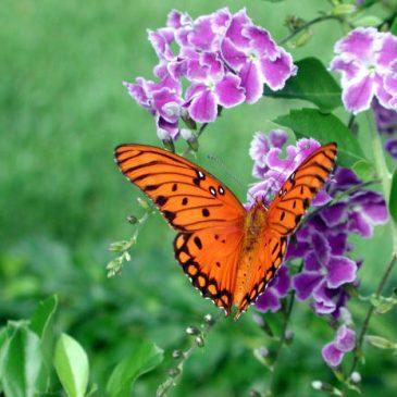 animales de poder (mariposa)