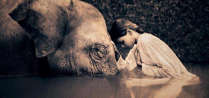 elefante como animal de poder