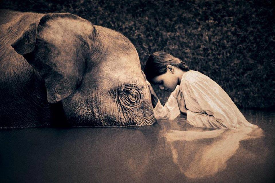 El Elefante como animal de poder