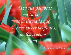 Pensamiento Rumi